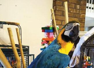 Birds Biggysmalls