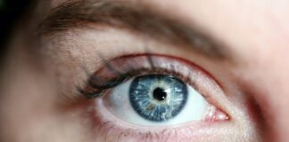 Woman Eye Lashes Blue Eye Portrait Eye Skin Girl