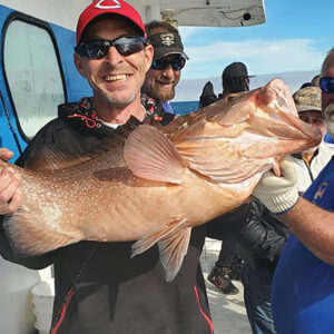 Capt A 34 Inch Red Grouper
