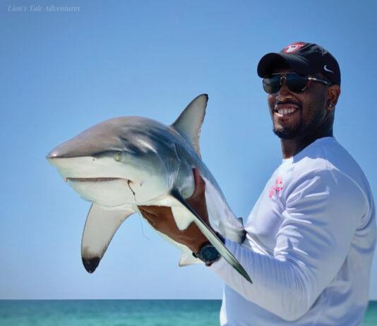 Shark At Ya